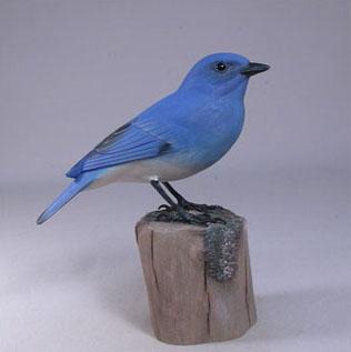 Mountain Bluebird #1