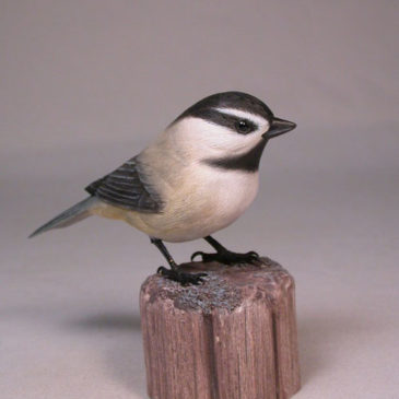 Mountain Chickadee #1