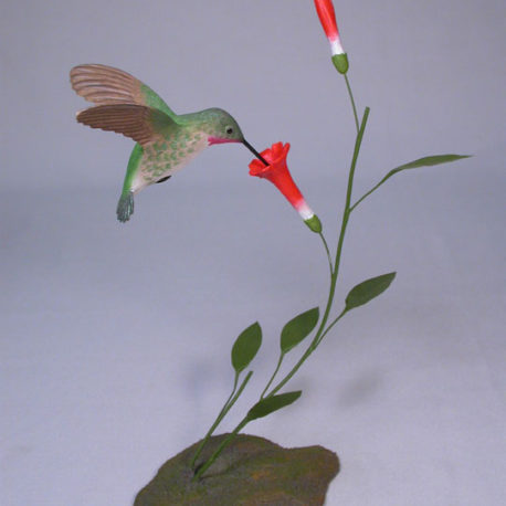 Open-winged Broad-tailed Hummingbird #2