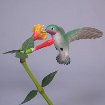Open-winged Broad-tailed Hummingbird #3