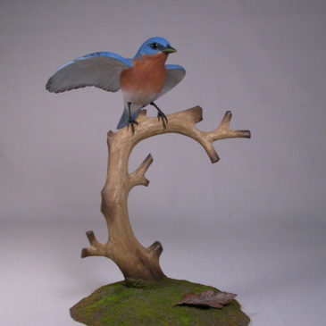 Open-winged Eastern Bluebird