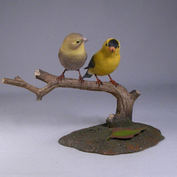 Pair of American Goldfinches (Male and Female)