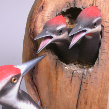 Pileated Woodpecker with Babies