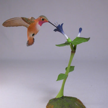 Open-winged Rufous Hummingbird