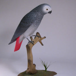 10-1/2″ African Grey Parrot