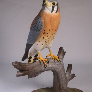 9-1/4″ Male American Kestrel (the smallest and most common falcon)