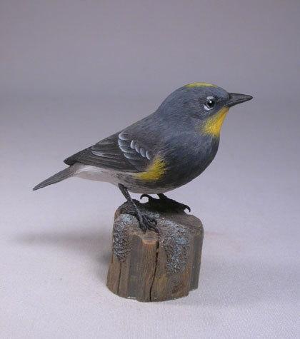 AudubonWarbler2