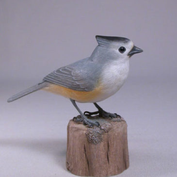 Black-crested Titmouse-1
