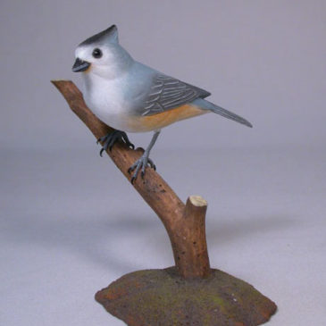 Black-crested Titmouse on branch