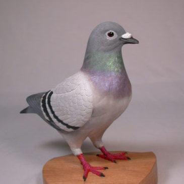 9″ Blue Bar Racing Pigeon