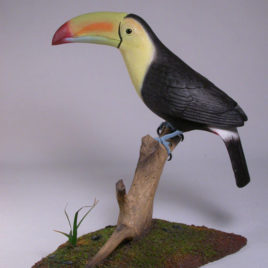 10″ Keel-billed Toucan