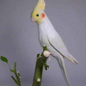 12-3/4″ Lutino Cockatiel