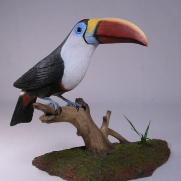 10 inches Red-billed Toucan
