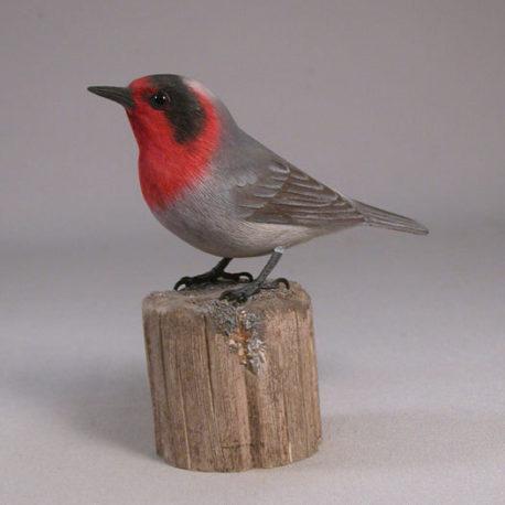 Red-facedWarbler1