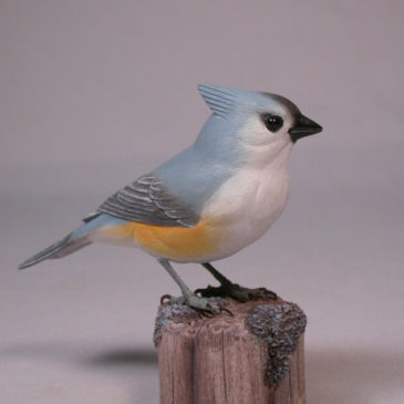 Tufted Titmouse#1