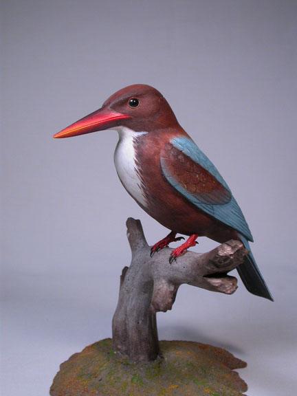 White-throatedKingfisher3