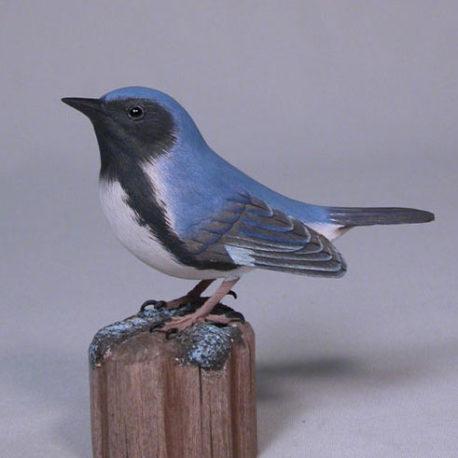 blue-warbler