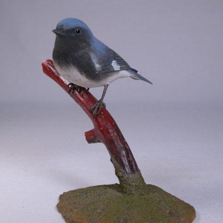 blue-warbler2