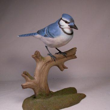 Life Size 9-7/8″ Blue Jay #1