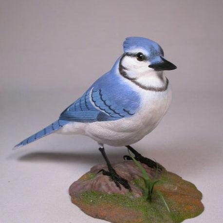 bluejay2-1
