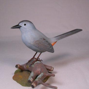 Gray Catbird #1