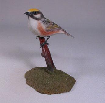 chestnut-sided-warbler2-1