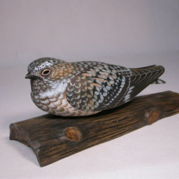 8 1/4″ Common Nighthawk