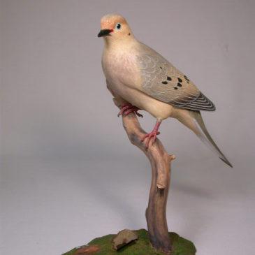 Life Size Mourning Dove