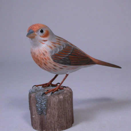 foxsparrow1