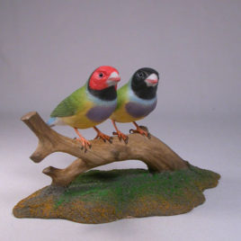 Gouldian Finches Pair #1