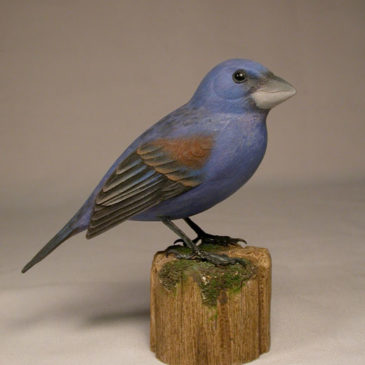 Blue Grosbeak #1