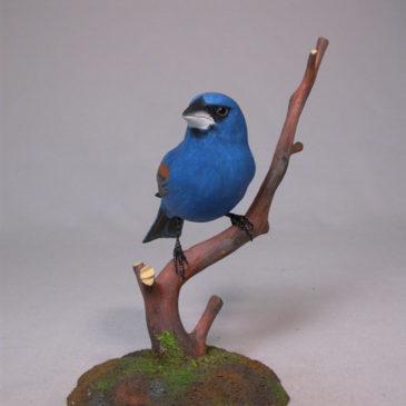 Blue Grosbeak #2