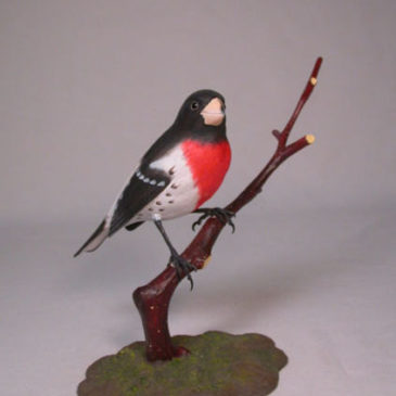 Rose-breasted Grosbeak #2
