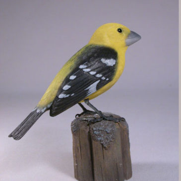 Yellow Grosbeak #1