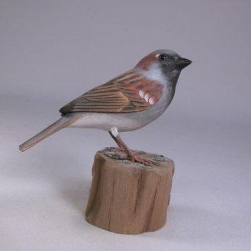 House Sparrow #1