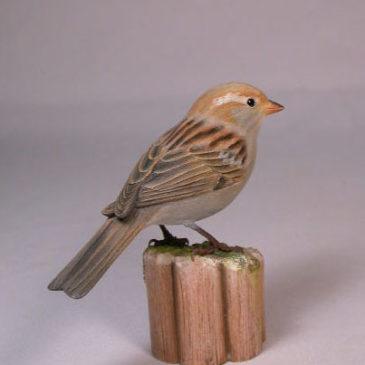 House Sparrow (female)#1