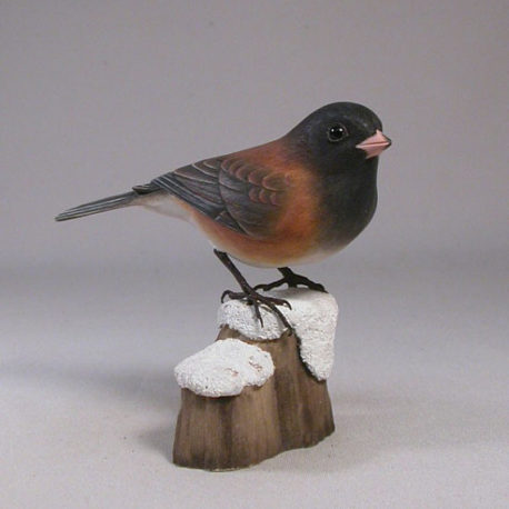 junco-or1