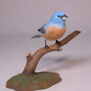 Lazuli Bunting on branch #2