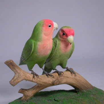 Pair of Peach-faced Lovebirds #1