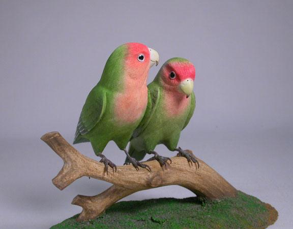 lovebird-p1-1