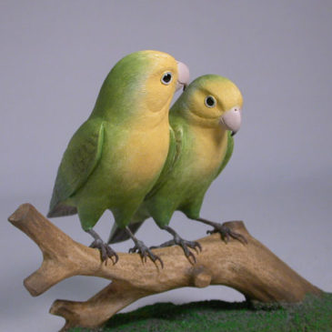 Pair of Peach-faced Lovebirds #2