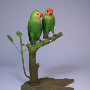 Peach-faced Lovebird Pair