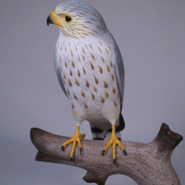 9-1/2″ Life Size Merlin (a small species of falcon )