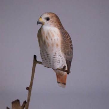5-1/2″ Red-tailed Hawk