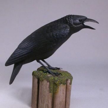 9″  American Crow #1