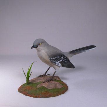Northern Mockingbird #1