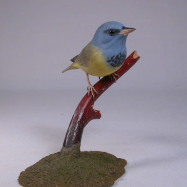 Mourning Warbler #2