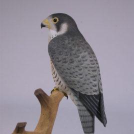 5-1/2″ Peregrine Falcon #2