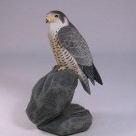 5-1/2″ Peregrine Falcon #1