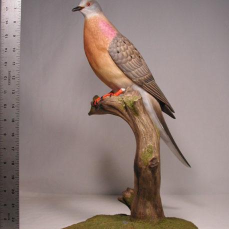 pigeon100